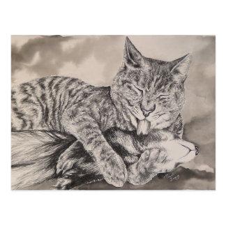 Katze und Frettchen Postkarte