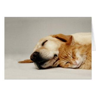 Katze und Hund, die zusammen… schlafen Grußkarte