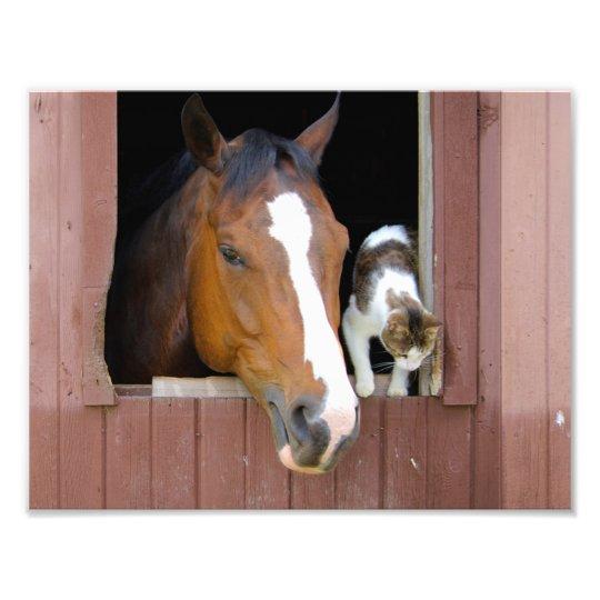 Katze und Pferd - Pferderanch - Pferdeliebhaber Fotodruck