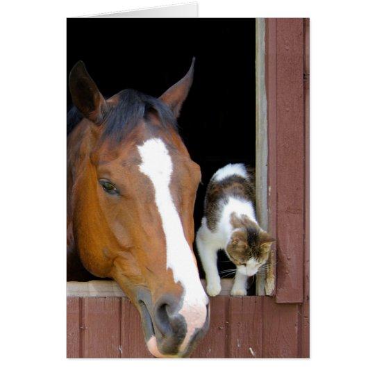 Katze und Pferd - Pferderanch - Pferdeliebhaber Grußkarte