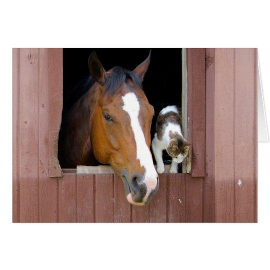 Katze und Pferd - Pferderanch - Pferdeliebhaber Mitteilungskarte
