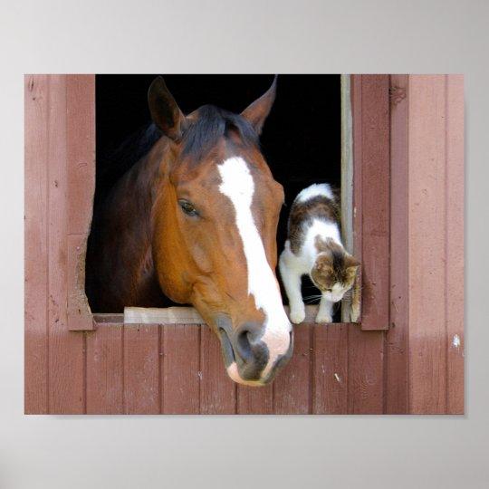 Katze und Pferd - Pferderanch - Pferdeliebhaber Poster