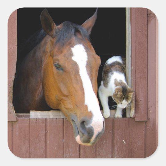 Katze und Pferd - Pferderanch - Pferdeliebhaber Quadratischer Aufkleber
