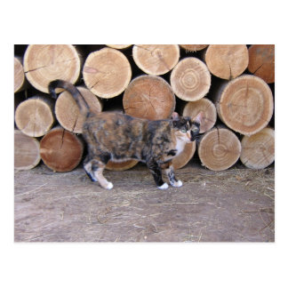Katze und Woodpilepostkarte Postkarte