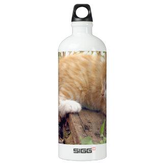 Katze Wasserflasche
