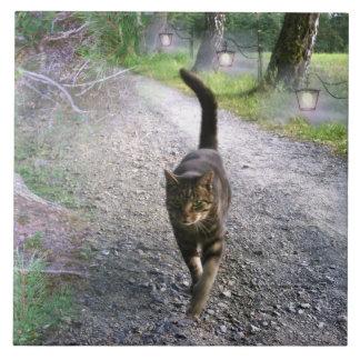 Katzen-Alleen-Fliese Große Quadratische Fliese