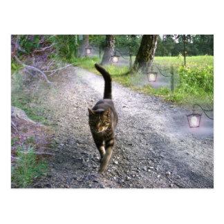 Katzen-Alleen-Postkarte Postkarten