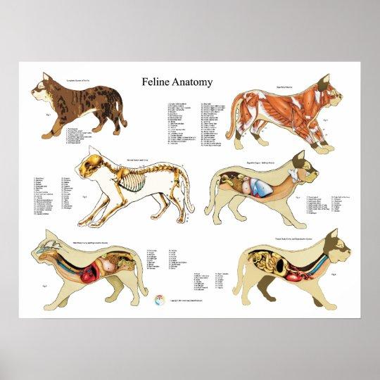 Katzen-Anatomie-Plakat-Wand-Diagramm Poster | Zazzle