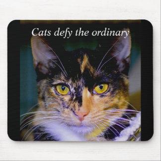 """""""Katzen fordern das Übliche"""" Aschen-Mausunterlage Mousepads"""