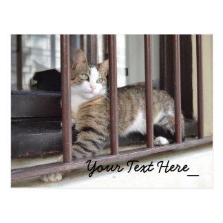 Katzen-Fotografie Postkarte