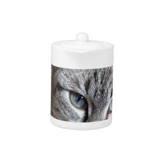 Katzen-Hauskatze-Kätzchen Mieze Makrelen-Haustier
