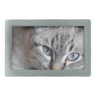 Katzen-Hauskatze-Kätzchen Mieze Makrelen-Haustier Rechteckige Gürtelschnalle