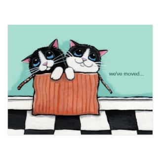 Katzen in einem Verpackungs-Kasten | haben wir Postkarte