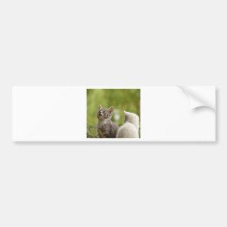Katzen-junge tierische neugierige wilde Tiernatur Autoaufkleber