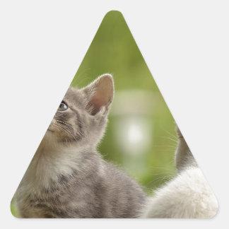 Katzen-junge tierische neugierige wilde Tiernatur Dreieckiger Aufkleber