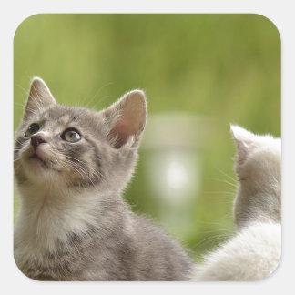 Katzen-junge tierische neugierige wilde Tiernatur Quadratischer Aufkleber