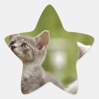 Katzen-junge tierische neugierige wilde Tiernatur Stern-Aufkleber