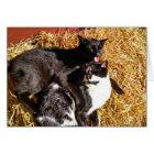 Katzen-Karten-Katzen der Liebe in der Liebe-I Sie Karte