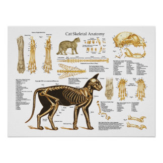 Katzen-katzenartiges skelettartiges poster