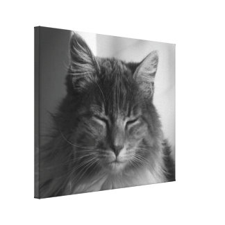 Katzen-Nachmittags-Meditation Leinwanddruck