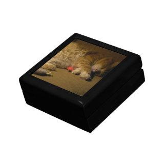 Katzen-Nickerchen Erinnerungskiste