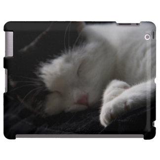 Katzen-Nickerchen