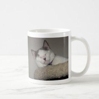 Katzen-Nickerchen Kaffeetasse