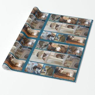 Katzen-Packpapier Geschenkpapier