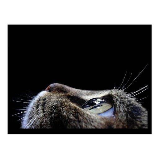 Katzen-Profil-Postkarte