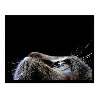 Katzen-Profil-Postkarte Postkarte