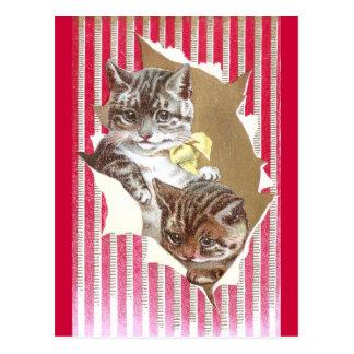 Katzen-Riss durch Packpapier Postkarte