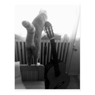 Katzen-Schwanz. Schwarzes/Weiß Postkarte