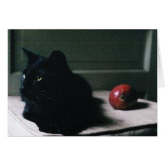 Katzen- u. Mangokarte Karte