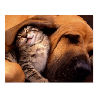 Katzen und Hunde Postkarte