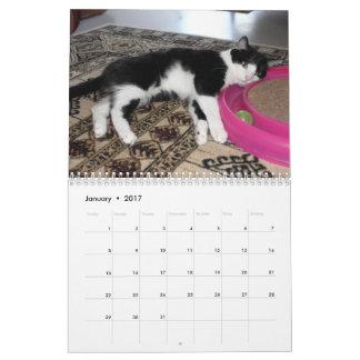 Katzen-und Kätzchen-Kalender Abreißkalender