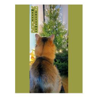 Katzen-und Weihnachtsbaum Postkarte