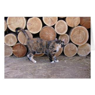 Katzen- und Woodpilekarte Karte