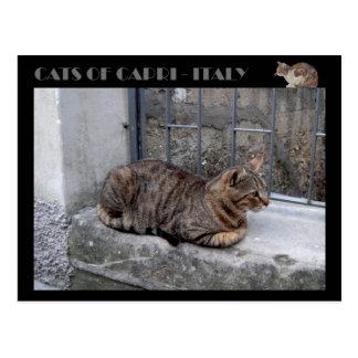 Katzen von Capri, Tabbykatze - Italien Postkarte