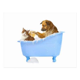 Katzen-Wäsche Postkarte