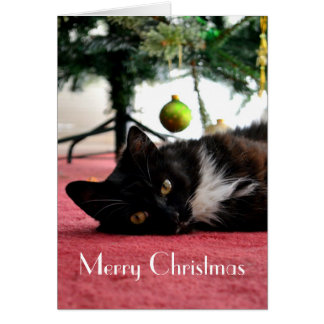Katzen-Weihnachtskarte Karte