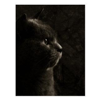 Katzenartige Silhouette - Postkarte