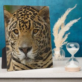 Katzenartiges Porträt Jaguars Fotoplatte