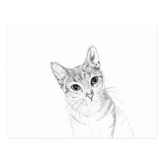 Katzenaugen ein Bleistift-Zeichnen Postkarte