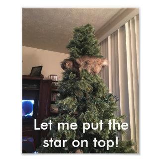 Katzenhilfen verzieren Baum Fotodruck