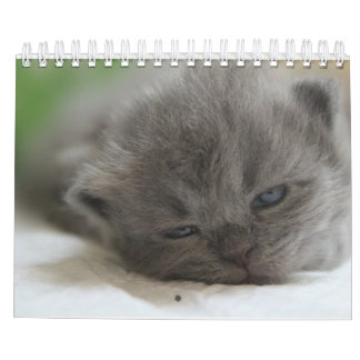 Katzenkalender Abreißkalender