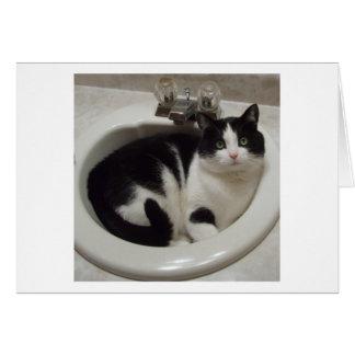Katzenliebhaberfreude Karte