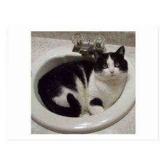 Katzenliebhaberfreude Postkarte