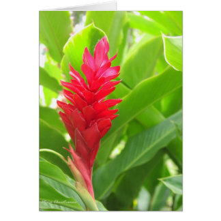 Kauai-Garten Karte