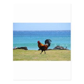Kauai-Hahn Postkarte