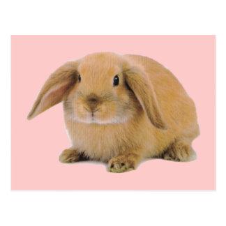 Kawaii niedliches Häschen-Kaninchen Postkarte
